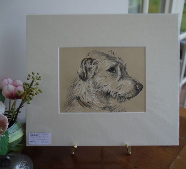 Irish Wolfhound - head - IW D1 -1930's print by Lucy Dawson